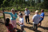 Wines and Winemakers